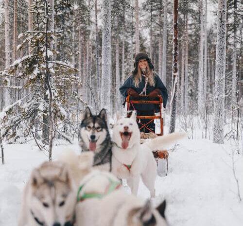 Hundsläde som aktivitet på Granö Beckasin