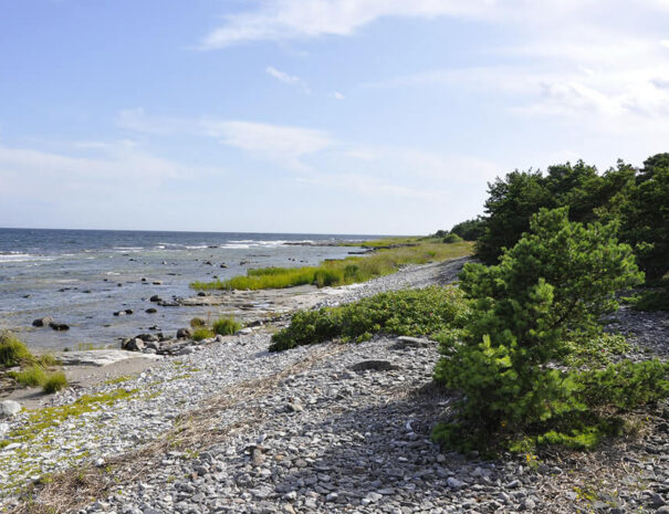 Teambuilding på stranden på Gotland